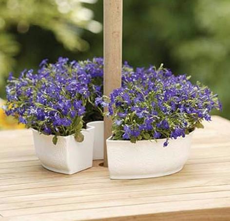 Combo 2 chậu trồng hoa quang trụ hoặc áp tường