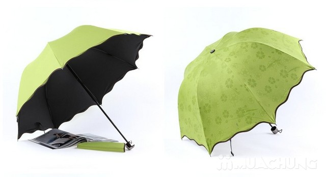 Chiếc dù nở hoa khi gặp mưa